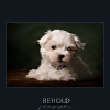 BeholdPets001.jpg
